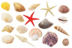 Assortment of seashells and starfishes  isolated on white background