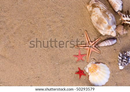 Assortment of starfish, seashells  in the sand