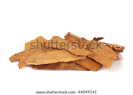 Astragalus root used in chinese herbal medicine, isolated over white background. Astragali radix, Zhi Huang Qui. Used to speed healing and treat diabetes.