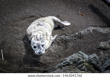 At first, I thought it was a dead animal on the beach. Then I realized it what a cute baby seal resting. After a couple pictures, I let it be to continue resting.