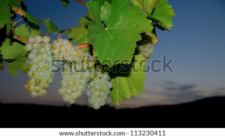 At night in a vineyard