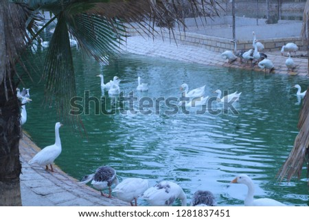 At safari park outdoor  park trip #1281837451