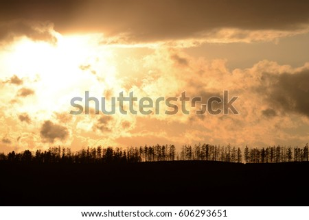 At sunset scenery with tree silhouettes #606293651