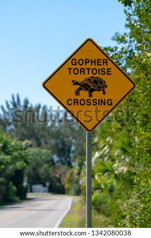 At the current time, mortality on roads is thought to be the most common cause of human-induced death in gopher tortoises.