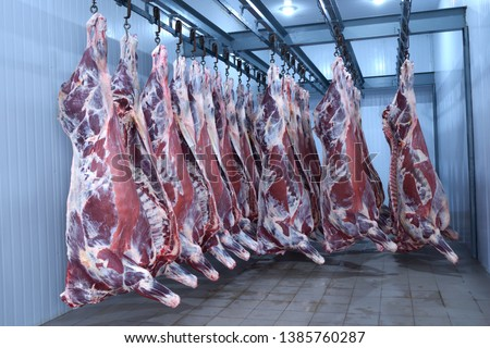 At the slaughterhouse. Carcasses, raw meat beef, hooked in the freezer #1385760287