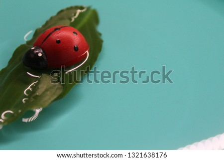 At this picture you can see a beautiful ladybug on the water.