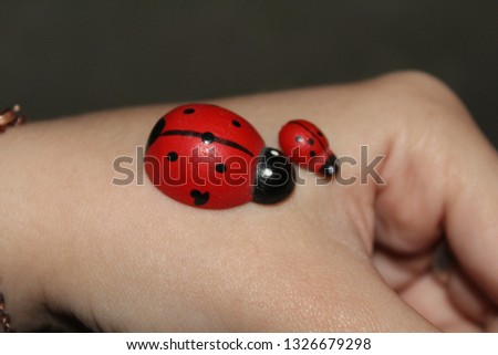 At this picture you can see two ladybugs.
