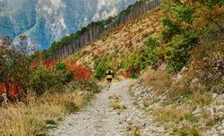 athlete runner run mountain trail on long descent. autumn marathon race