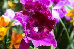 Atlanta Botanical Gardens - Orchids