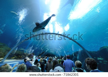 ATLANTA, GEORGIA - FEBRUARY 20: Aquatic tunnel in the Georgia Aquarium, the world's largest aquarium holding more than 8 million gallons of water February 20, 2011 in Atlanta, Georgia.