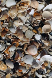 atlantic coastline detail - macro shot of many different broken and whole, colorful shells: brown, white, pink, yellow, black on a beach in Gambia, Africa with natural light on a sunny day
