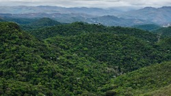 Atlantic forest remnant located in Nova lima, MG, Brazil