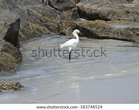 Atlantic Ocean Bird #583748524