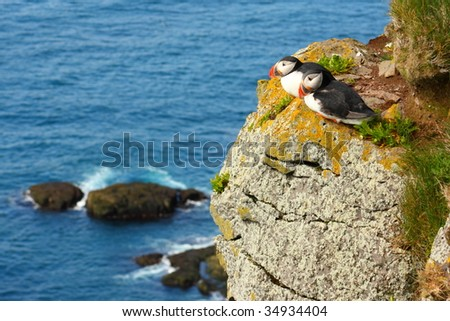 Atlantic Puffins. Latrabjarg bird cliffs in Icelandic West Fjords.
