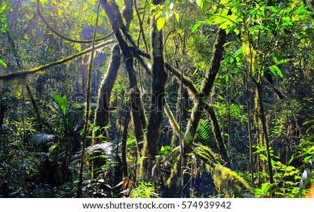 Atlantic rainforest floor at sunset. Hi res. Sample of Atlantic rainforest biodiversity at sunset, Southern Brazil.
