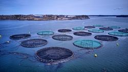 Atlantic salmon aquaculture cage site