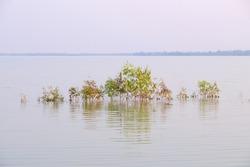 Atmosphere morning, Eucalyptus tree in water