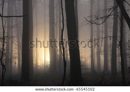 Atmospheric, even spooky, close crop soft focus image of woodland with sun trying to pierce the early morning mist. #65545102