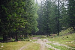 Atmospheric forest scenery with dirt road among firs in mountains. Scenic landscape with glade in mountain coniferous forest. Beautiful view to conifer trees in woodland. Stones on meadow in woods.