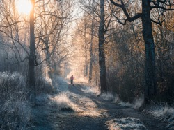 Atmospheric winter landscape with a sunny foggy path, trees covered with frost and the silhouette of a man walking a pack of dogs. Soft focus.