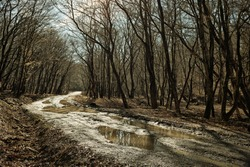 Atristic photo of a winding forest way with lots of puddles and bare trees in Backlight.