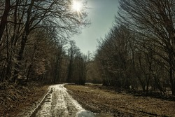 Atristic photo of a winter bare forest way with puddles in Backlight with sunbeam, HDR image with black gold filter