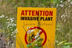 Attention sign for invasive plant Japanese knotweed in Canada