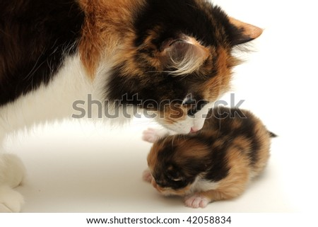 Attentive mother with it's kitten