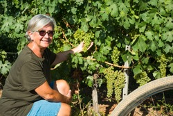 Attractive and smiling senior woman with white hair takes a break and checks the bunches of grapes. E bike close to her, for healthy lifestyle. One happy people.Green vineyard in background.