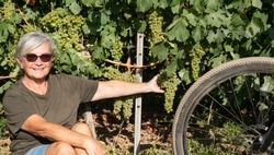 Attractive and smiling senior woman with white hair takes a break and rests close to bunches of grapes. E bike close to her, for healthy lifestyle. One happy people.Green vineyard in background.
