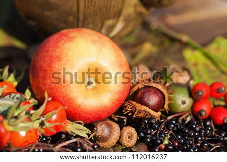 attractive autumnal picture of an apple and other autumnal fruits