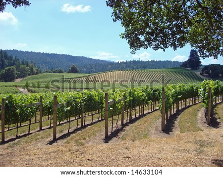Attractive Vineyard in Northern California's Wine Country