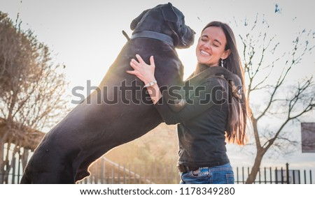 Attractive woman and her large dog jumping up on her. Great dane. Foto d'archivio ©