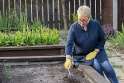 Attractive woman gardener loosens fertile soil with culti-hoe before planting seedlings seeds vegetables on raised garden bed, farmer working in garden. Agriculture, cultivate, eco organic products
