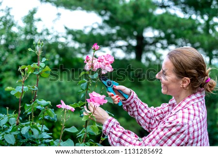 Attractive Woman In Plaid Shirt Is Pruning Roses In Garden With Shears