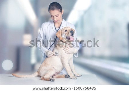 Attractive young female doctor with funny canine patient #1500758495