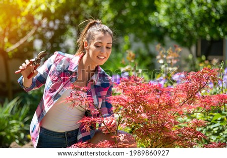 Attractive young woman trimming decorative red acer. Female gardener using hand shears to prune tree. Stock photo ©