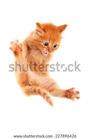 Auburn kitten jumping. Isolated. #227896426
