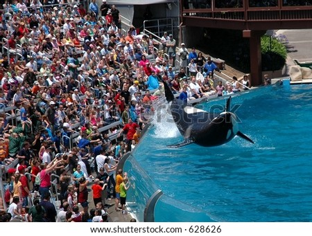 Audience enjoying show by a killer whale