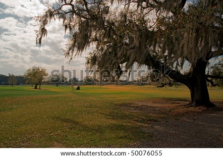 Audubon Park in New Orleans, in forground oak tree draped with spanish moss