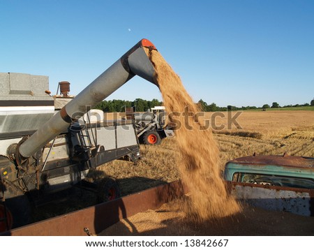 auger unloading a load of harvested wheat into truck