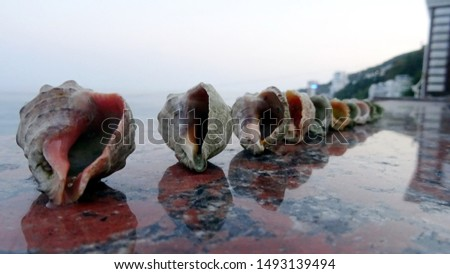 aught seashells from the sea Stock photo ©