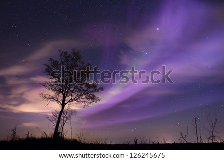 Aurora bore alis and lone tree in the fields.