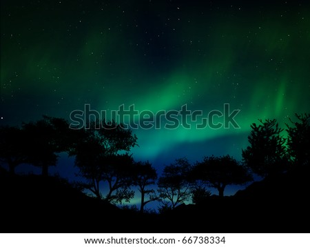 Aurora borealis above the forest