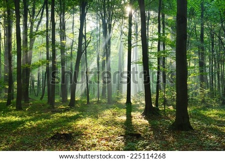 aurumn morning in the forest #225114268