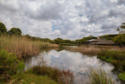 Austin Roberts Bird Sanctuary on a lake sky reflection in Pretoria South Africa