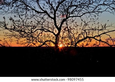 Austin Sunset - stock photo