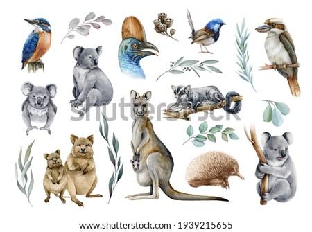 Australia animal and bird watercolor set. Hand drawn kangaroo, koala, kookaburra, echidna, kingfisher, cassowary, eucalyptus branch realistic collection. Astralia wildlife flora and fauna set