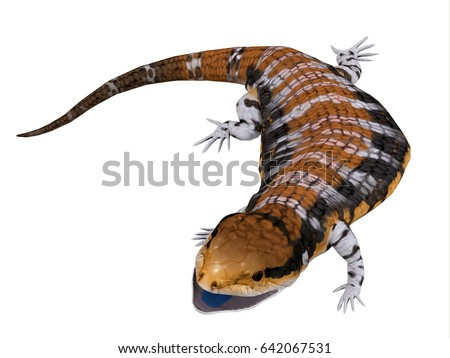 Shutterstock Australia Blue-tongued Skink 3d illustration - The Australia Blue-tongued Skink is a large terrestrial lizard that is active during the day and omnivorous.