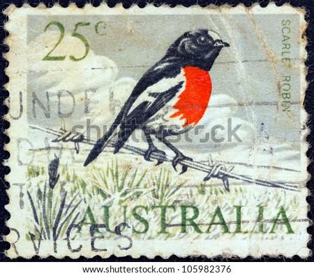 AUSTRALIA - CIRCA 1966: A stamp printed in Australia shows a Scarlet robin (Petroica boodang) bird, circa 1966.